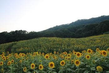 himawari5.jpg
